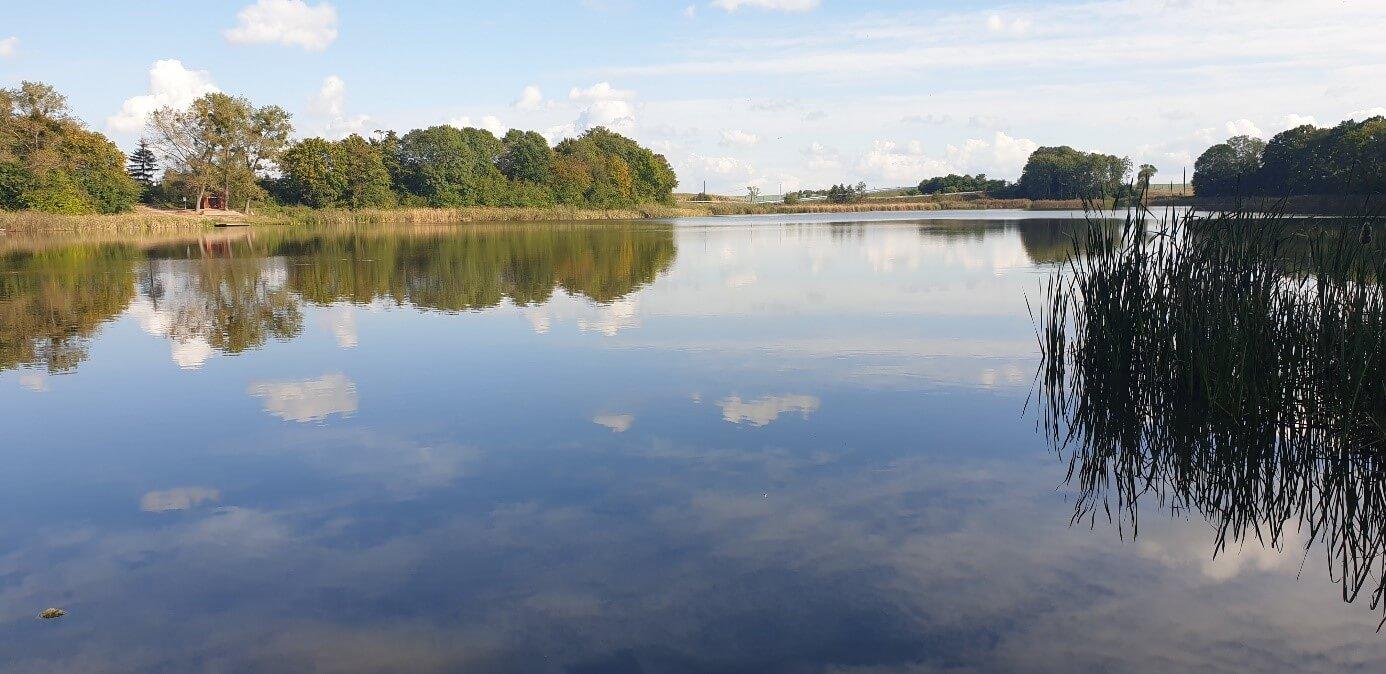 Śnięcie ryb w jeziorze Dźwierzno