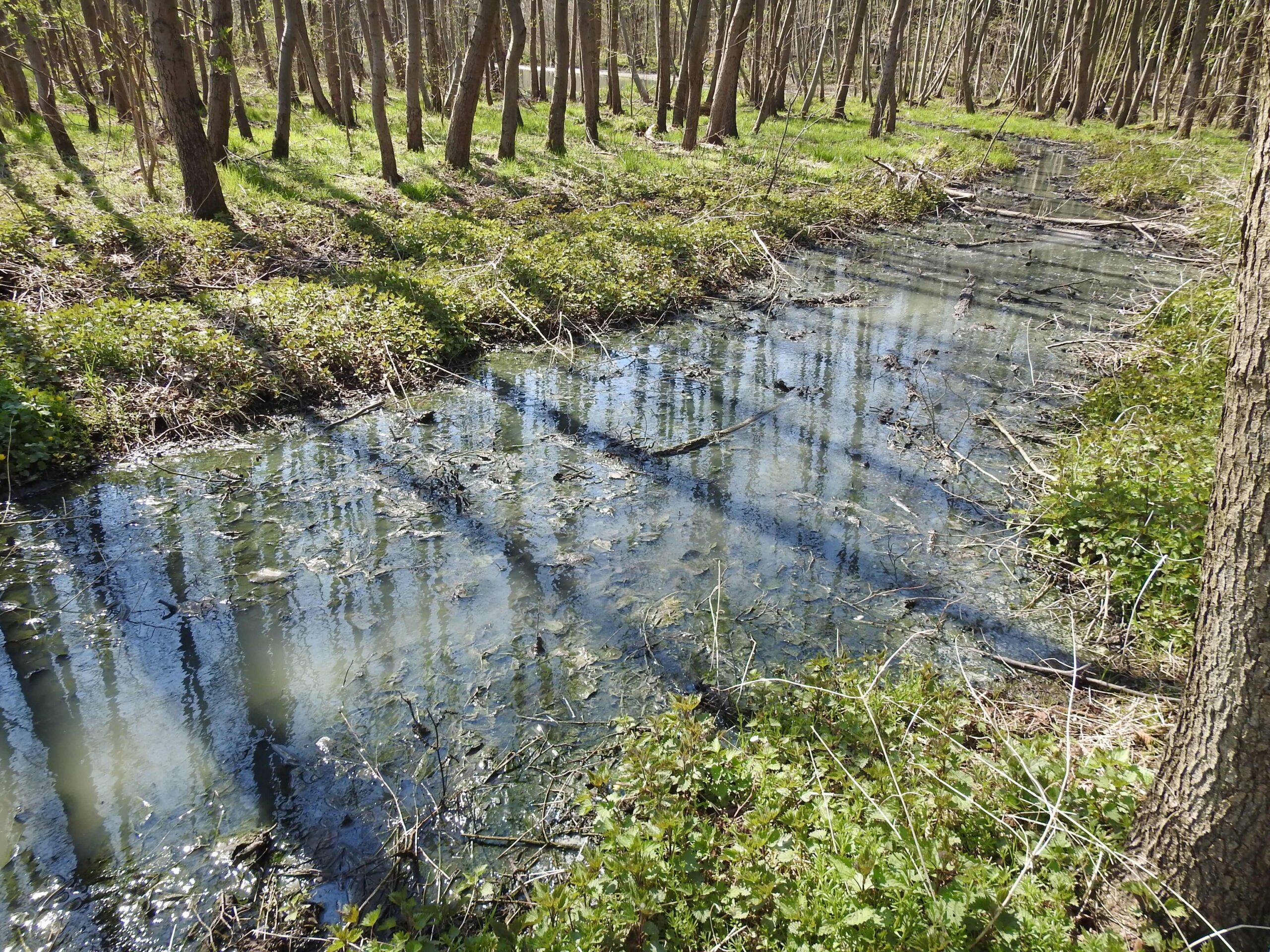 Zrzut ścieków do zbiornika wodnego w Krąplewicach